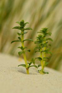 Zbliżenie profilowe na zielony pęd i listki rośliny. Tło rozmazane.