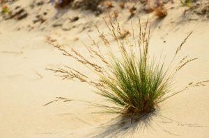 Osamotnione trawy na plaży otoczone wyłącznie przez piasek