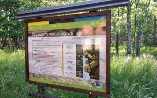 Stojąca w lesie tablica edukacyjna: organizmy wskaźnikowe.