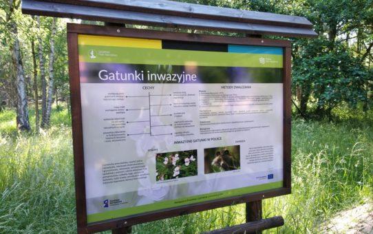 Stojąca w lesie tablica edukacyjna: Gatunki inwazyjne.