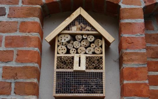 Własnoręcznie przygotowany domek dla murarki ogrodowej
