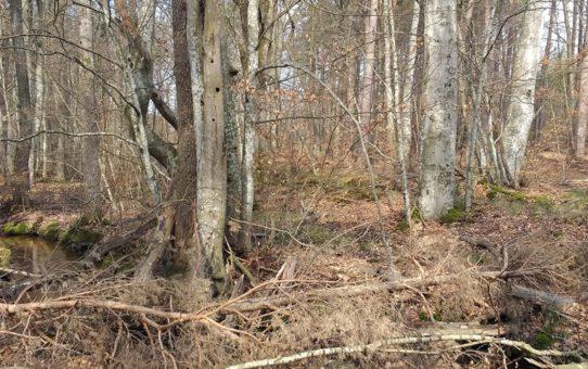 Wczesną wiosną las pachnie ziemią i zbutwiałym drewnem