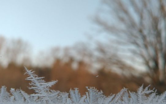Delikatne kryształki lodowe tworzą formy przypominające pierzaste listki roślin. Tło rozmyte.