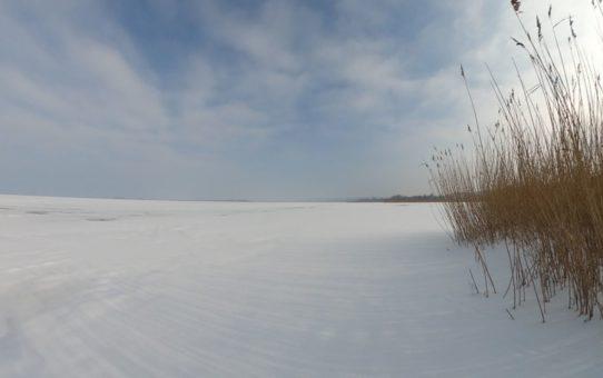 Zimowa odsłona Jeziora Gardno z pasem trzcin, przysypaną śniegiem taflą lodu i błękitnym niebem w tle.
