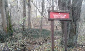 Fragment lasu łęgowego zimą, a w nim czerwona tablica z oznakowaniem obszaru Natura 2000, na tle opadłych liści wyrażnie widać liczne pędy zielonego skrzypu zimowego.