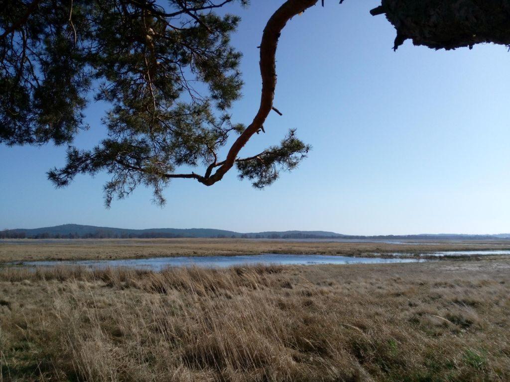 Kompletny krajobraz obejmujący konar drzewa wybiegający wgórę. Przedoczyma rozpościera się widok rozlewisk, awieńczy go wał wzgórz morenowych.