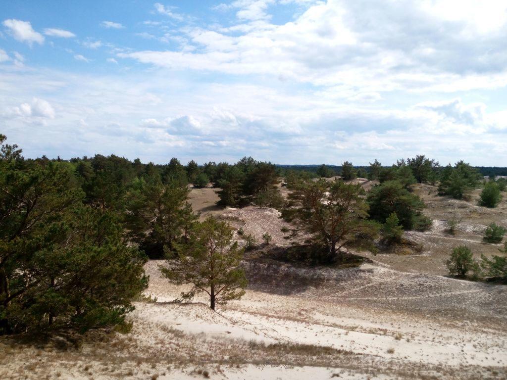 Widok naotwartą ipofałdowana przestrzeń częściowo utrwalonych wydm. Pojedyncze, niewysokie sosny dopełniają krajobraz.