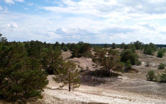 Widok na otwartą i pofałdowana przestrzeń częściowo utrwalonych wydm. Pojedyncze, niewysokie sosny dopełniają krajobraz.